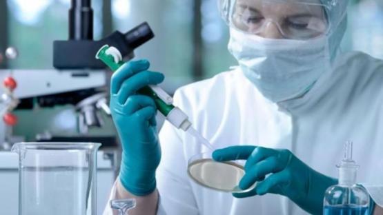Un nuevo estudio calcula cuánto duran los anticuerpos en quienes superaron el coronavirus