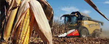 El maíz, un aliado clave para la rotación de cultivos